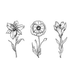 Flower set lily poppy crocus floral vector