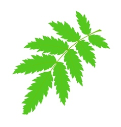 Green rowan leaf vector image
