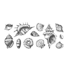 hand drawn tropical marine seashells black vector image