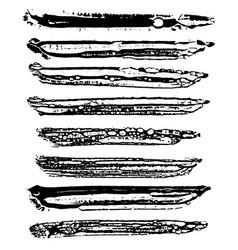 ink sponge brushes vector image