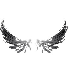 Black wings on white vector