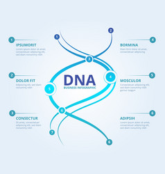 Dna infographics spiral human biology structure vector