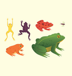 Exotic amphibian set frogs in different styles vector