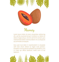 mamey exotic juicy fruit poster text leaves vector image