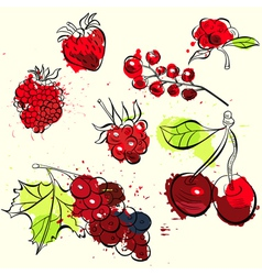 stylized fruit and berries vector image