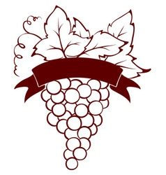 Bunch of grapes with ribbon vector image vector image