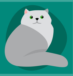 cat breed siberian cute pet portrait fluffy gray vector image