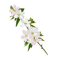 Apple blossom icon on a white background vector