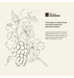 engraving grapes branch vector image