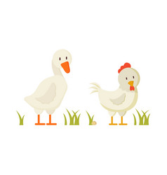 goose and chicken pair white domestic birds vector image