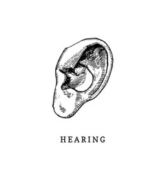 hand drawn icon of human sense of hearing in vector image