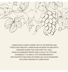 Engraving of grapes branch vector image