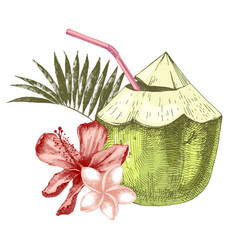 Green coconut with flowers palm leaves and vector