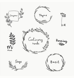 hand drawn set of culinary herb vector image