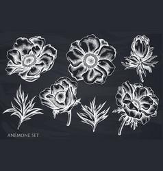 Set hand drawn chalk anemone vector