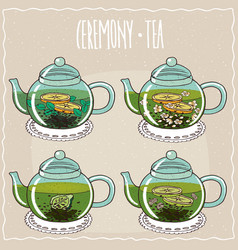 Set of different brewed useful teas vector