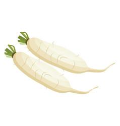 White radish roots of vegetables on white vector