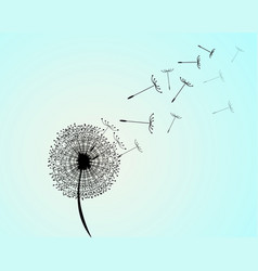 wind has blown on a dandelion vector image