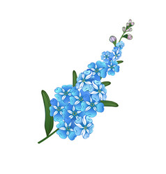 Forget me not floral vector