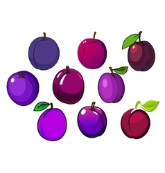 Fresh isolated purple and violet plum fruits vector