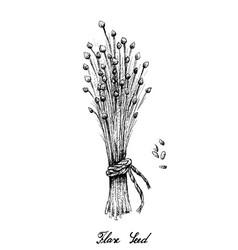 Hand drawn flax seed or linum usitatissimum vector