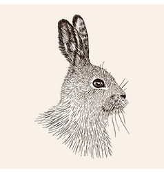 Sketch rabbit Hand drawn the hare Realistic vector image
