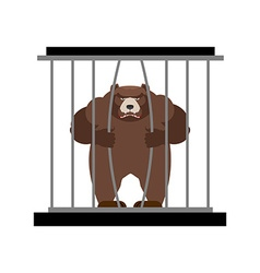 Bear in Zoo cage Strong Scary wild animal in vector