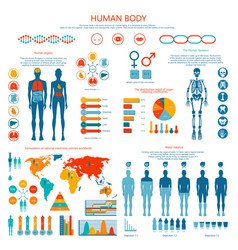 Concept human body colored infographic cartoon vector