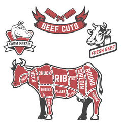 Cow cuts butcher diagram design element for vector