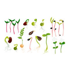 Green sprouts microgreen growing seed plant vector