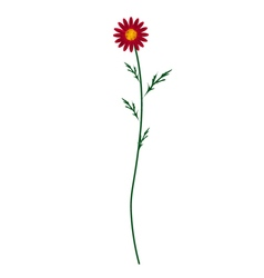 Red Daisy Blossom on A White Background vector