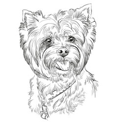 Hand drawing portrait of yorkshire terrier vector