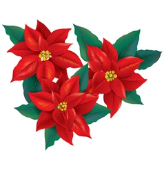 Red poinsettia christmas flower vector