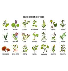 Best herbs for allergy relief vector