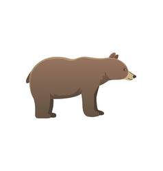 broun american bear isoalted vector image