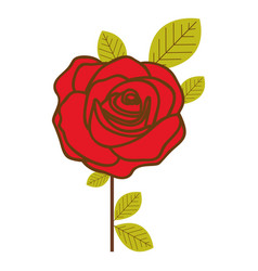 Colorful flowered red rose with leaves and stem vector