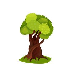 Green deciduous tree vector