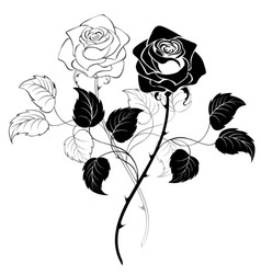 two roses vector image