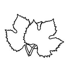 leaves tree grape wine design vector image
