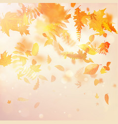 autumnal foliage fall and poplar leaf flying in vector image