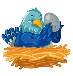 Blue bird hatching egg in nest vector image