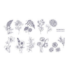 collection of gorgeous floristic flowers and wild vector image