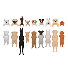 dogs of different breeds hanging on border vector image
