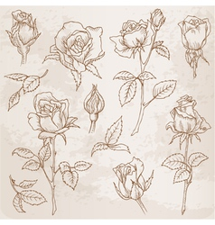 Flower Set Detailed Hand Drawn Roses vector image