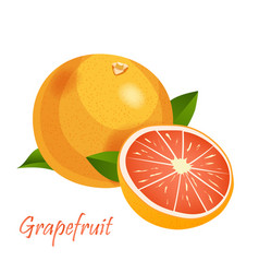 grapefruit emblem isolated on vector image