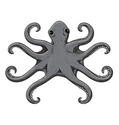 Octopus with symmetric tentacles gray hand drawn vector