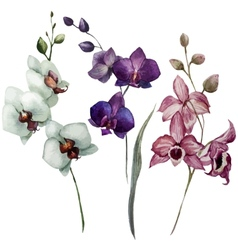 Beautiful orchid flower3 vector image
