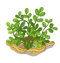 Planting and cultivation of cashew vector image vector image