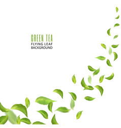 flying green leaves on white background leaves in vector image