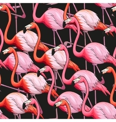 Colorful flamingo seamless background vector
